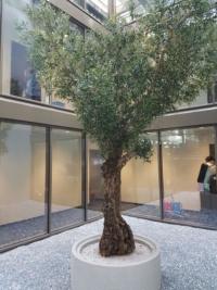 £Begrünung eines Atriums mit einem exklsuiven, künstlichen Olivenbaum.