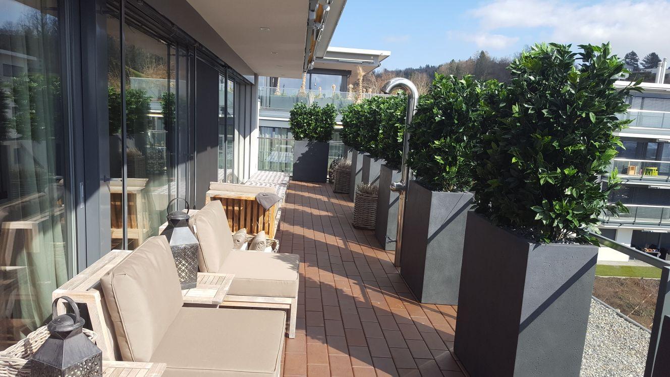 Attika Terrassengestaltung mit Kirschlorbeer Heckenpflanzen in Hohen Gefässen als Sichtschutz und Dekoration.