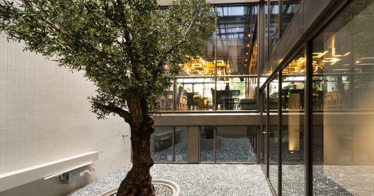 Grosser Olivenbaum 380cm als Begrünung Innen in einem Atrium, wo in einem Restaurant und Hotel steht.