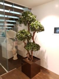 Begrünung im Innenbereich mit einem exklusiven Podocarpus Kunstbaum.