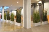 Raumteiler aus Kunstgras in Gefässen als Trennwand und Innendekoration.
