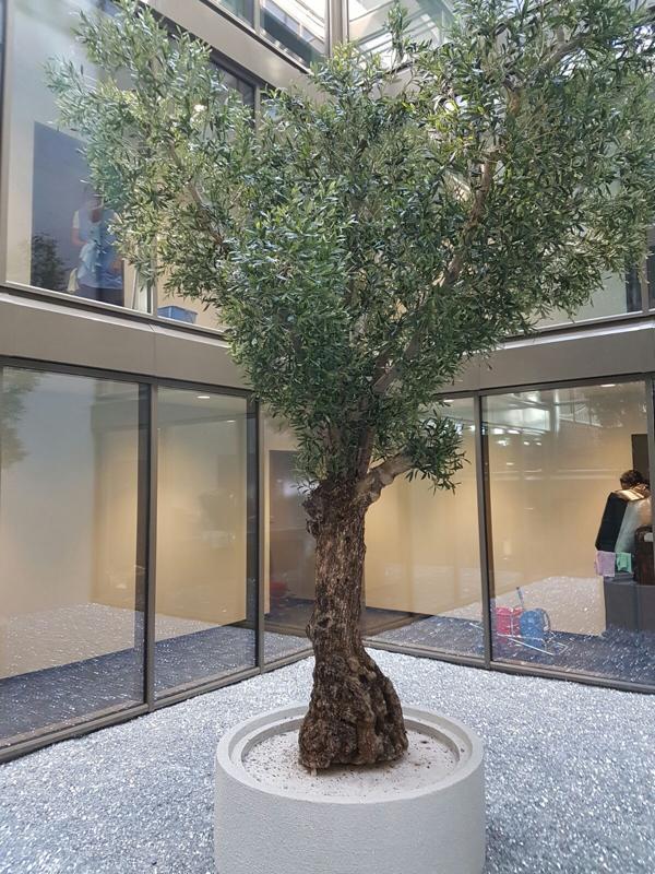 Begrünung Büro mit grossem Kunstbaum.