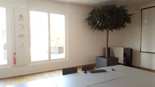Begrünung Sitzungszimmer mit einem grossen Baum im Pflanzgefäss.