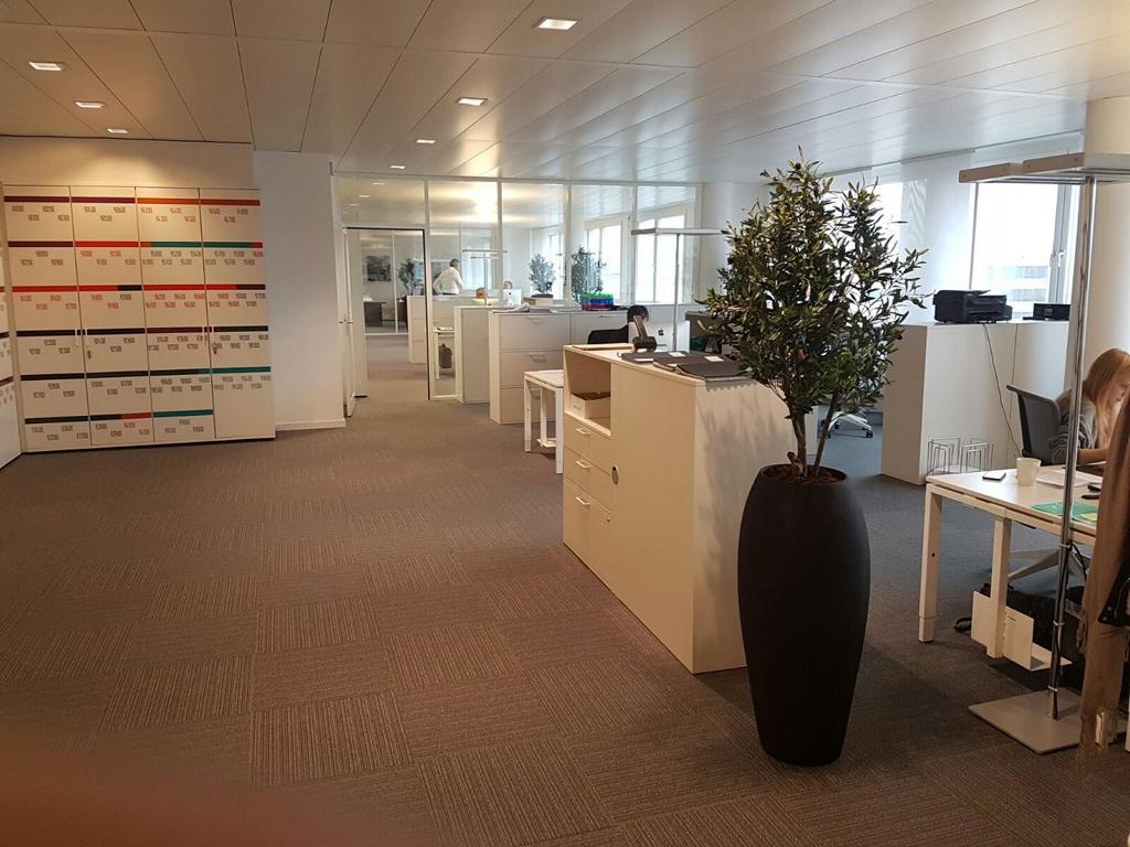 Bepflanzung Büro mit künstlichen Olivenbäume in hohen Pflanzgefässen.