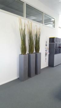 Innenbegrünung Büro mit Pflanzen in hohen Gefässen.