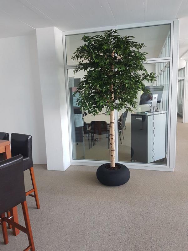 Begrünung mit grossen Pflanzen fürs Büro.