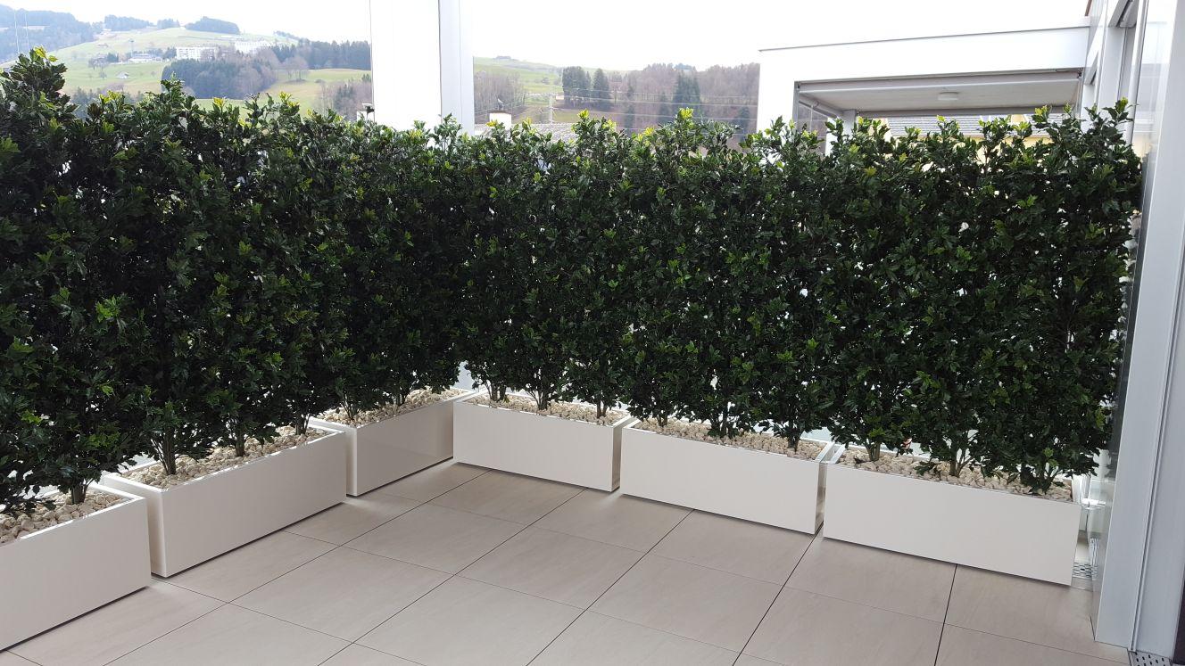 Begrünte Terrasse mit immergrünen Kübelpflanzen in Zürich.