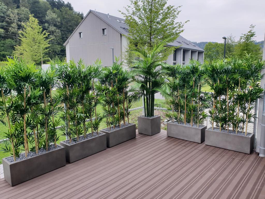 Terrassenbegrünung mit Hecken im Kübel auf Terrasse.