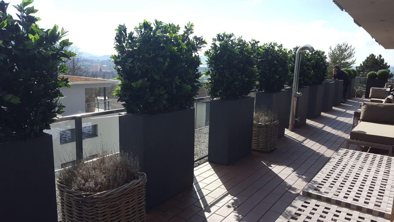 Terrassengestaltung mit Heckenpflanzen auf Terrasse in Zürich.