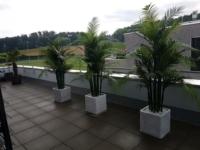 Attika Terrassengestaltug mit Palmen im Pflanzgefäss in Zürich.